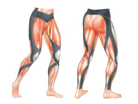 CW-X Stabilyx Tights Muscle Drawing